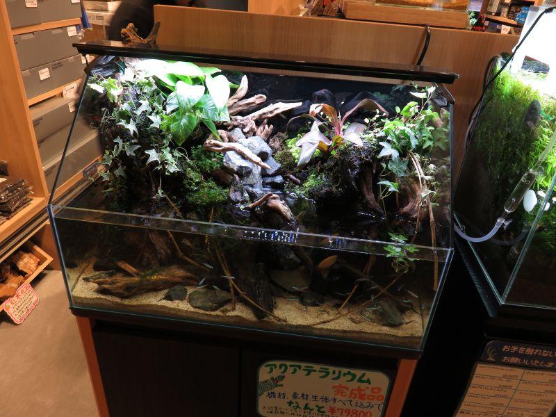 【ソラマチ店】 臨時テラリウム水槽