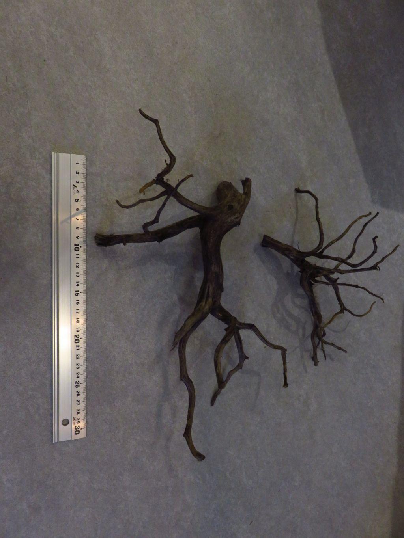 【ソラマチ店】枝流木・ブラックブランチ入荷しました