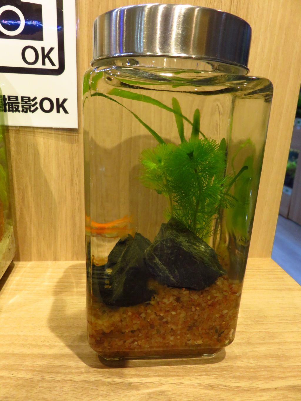 【ソラマチ店】森の寺子屋、定員まで残りわずかです!