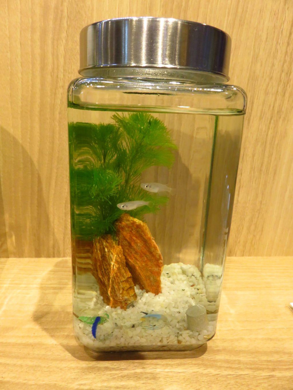 【ソラマチ店】森の寺子屋「ボトルアクアリウムを作ってみよう」明日開催です!