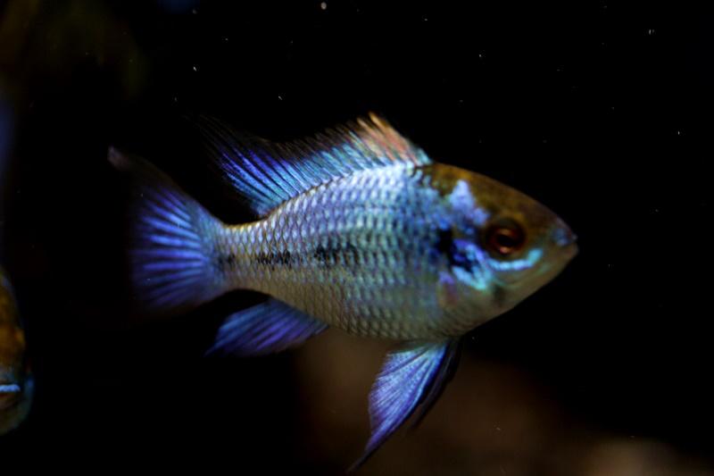 【新宿店】今週のオススメ魚はこちらです!