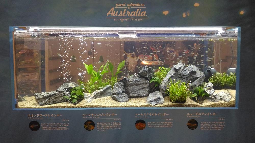 7/24まで オーストラリアのお魚 イオンレイクタウン オーストラリアンフェア開催中