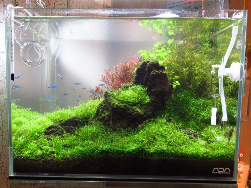 【ソラマチ店】36cm水槽を「創造配植」してみました! & 「森の寺子屋」予約〆切間近!!