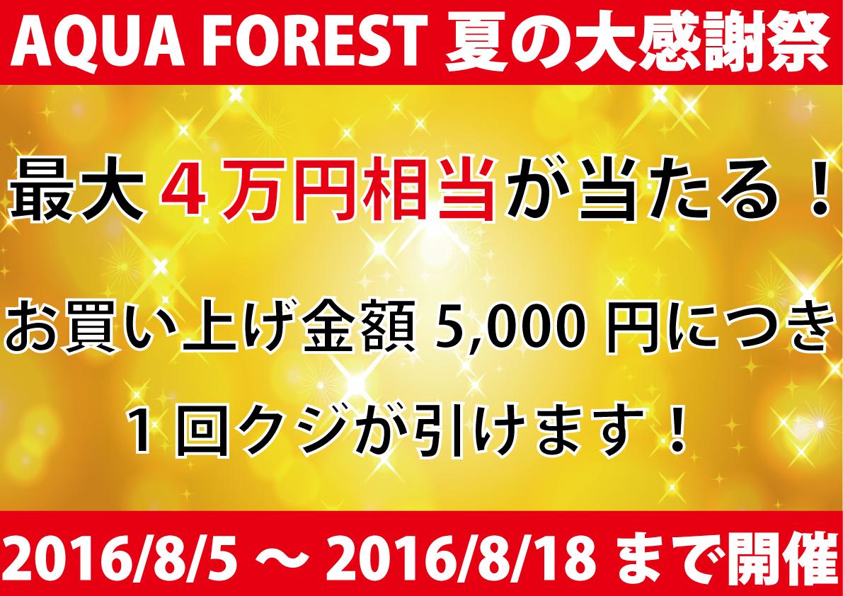 【新宿店限定】夏の大感謝祭8/5~8/18開催いたします!!