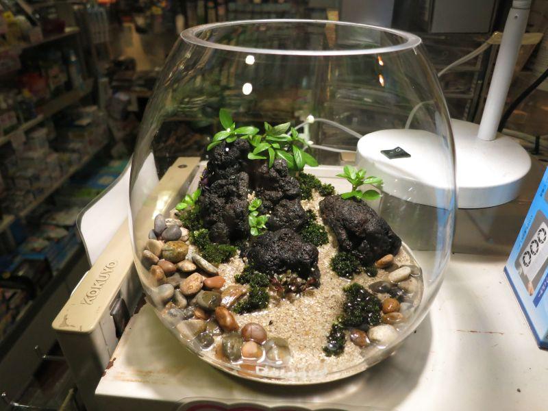 【新宿店】カニリウムを作りました