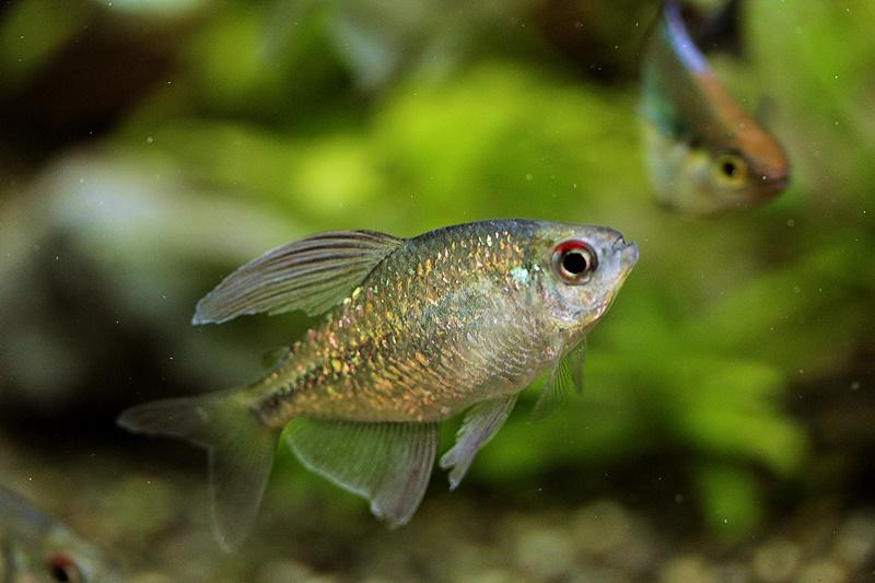 【新宿店】写真付き♪オススメ魚の紹介です!