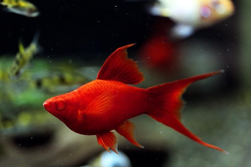 【新宿店】写真付き♪昨日の続きお魚紹介です!