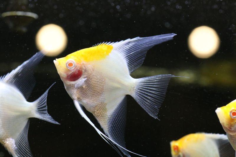 【ソラマチ店】お魚ご紹介!!