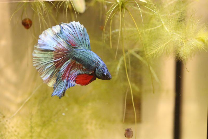 【ソラマチ】お魚ご紹介だす。
