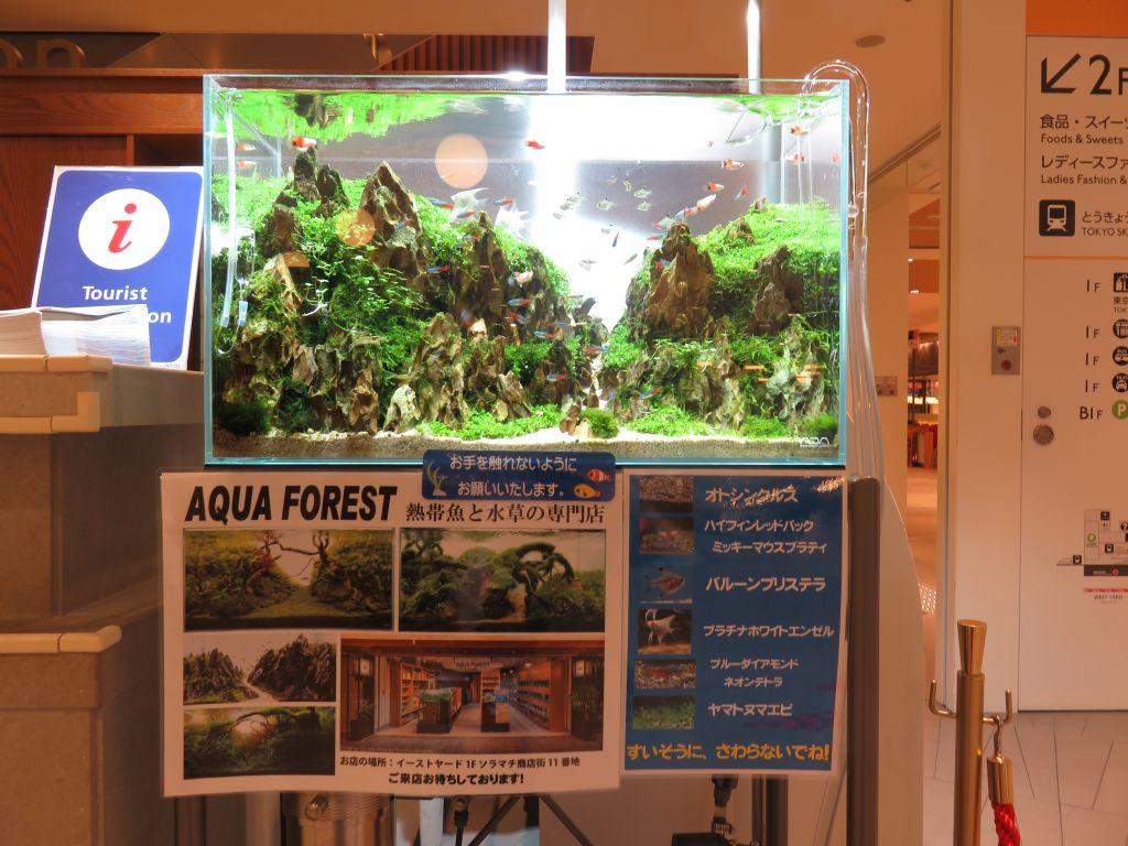 【ソラマチ店】60cm水槽用・黄虎石山岳レイアウトセットを販売します!