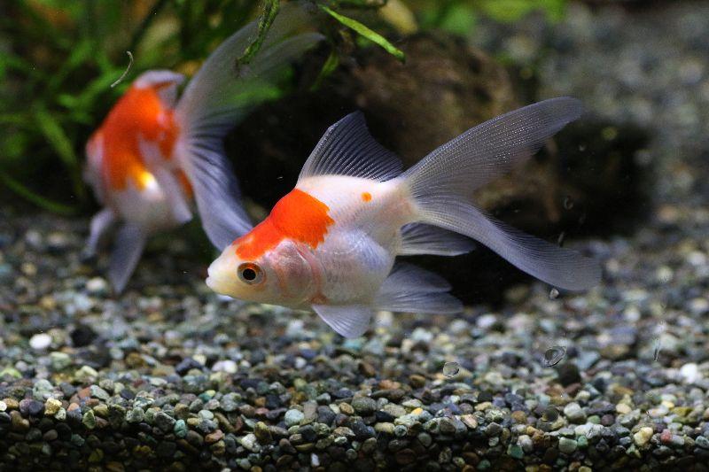 【ソラマチ店】お魚ご紹介。