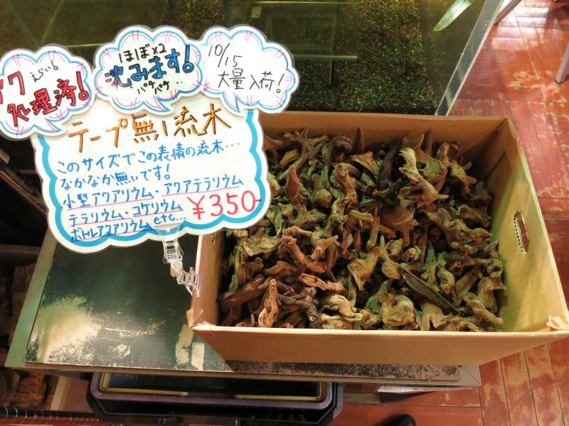 【新宿店】素敵な小型流木大量入荷 その他