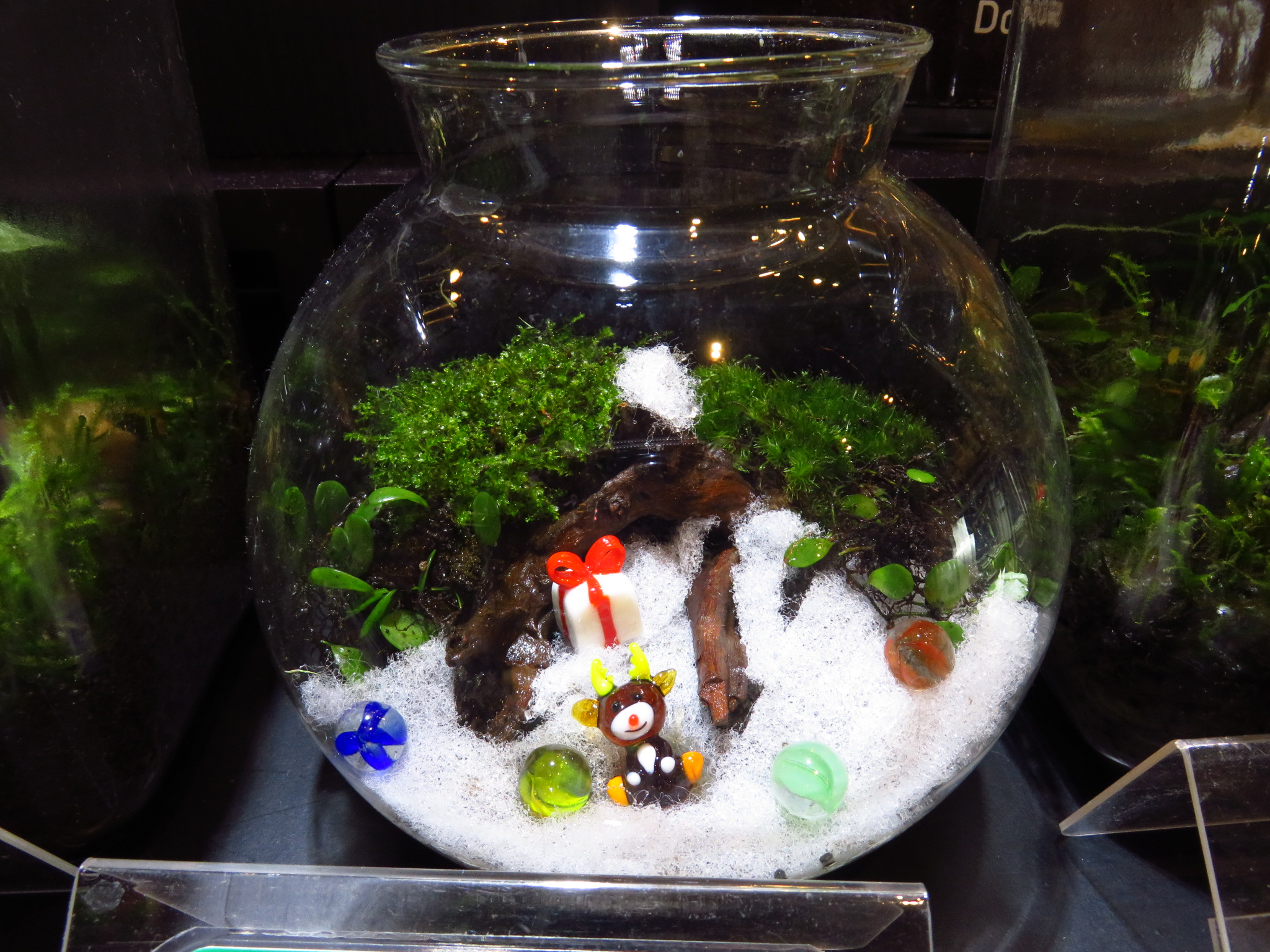 【ソラマチ】オヌヌメ水草とクリスマスコケリウム