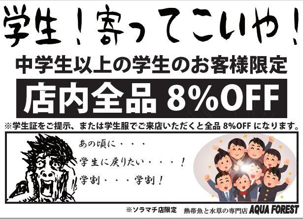 【ソラマチ店】明日は寺子屋第一弾、ボトルアクアリウムを作ってみようです!!