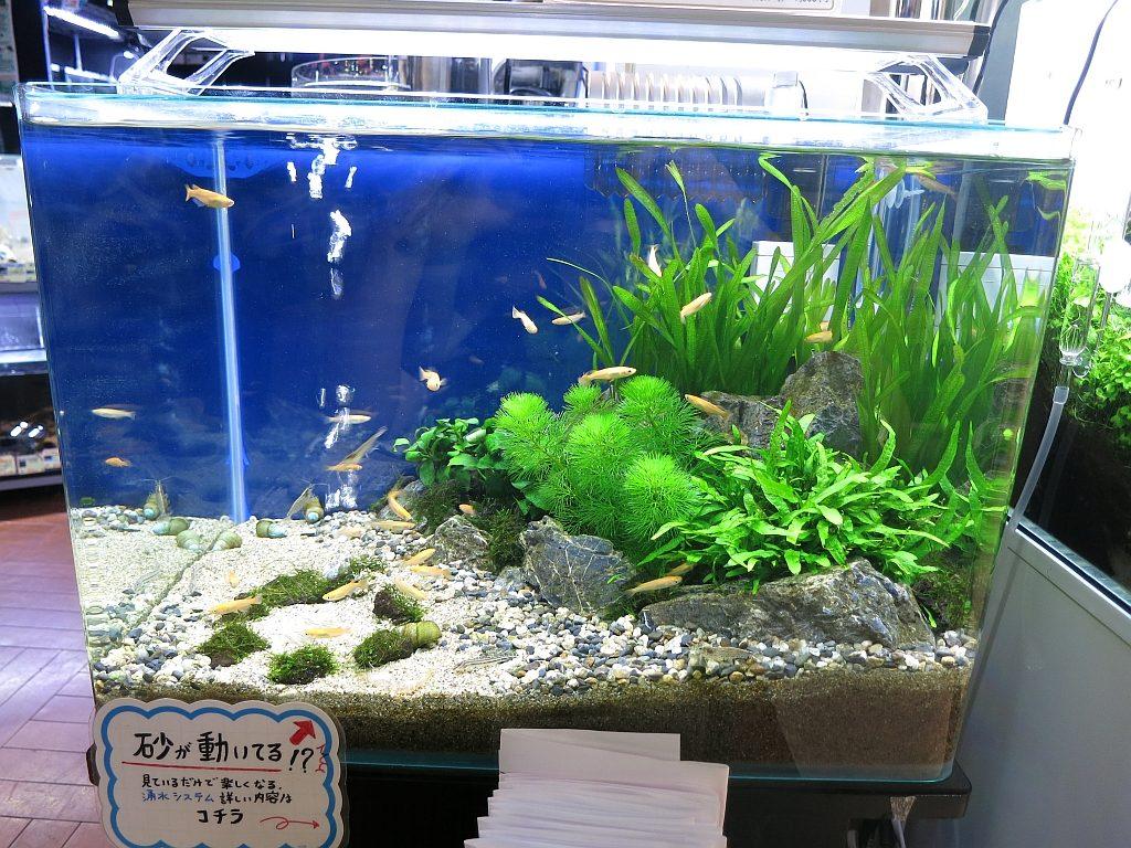 【新宿店】明日はいよいよ森の寺子屋「実践! 湧き水水槽レイアウト!」開催日です!