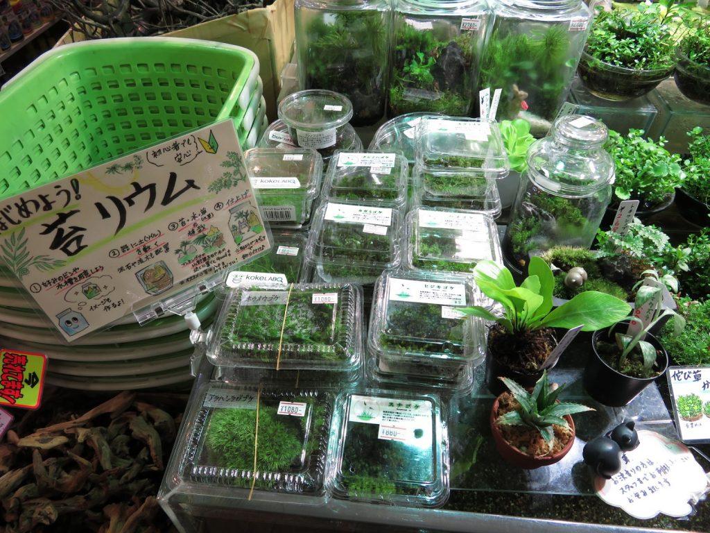【新宿店】2017年2月26日(日)森の寺子屋コケリウムを作ってみよう!!参加人数残りわずか!!