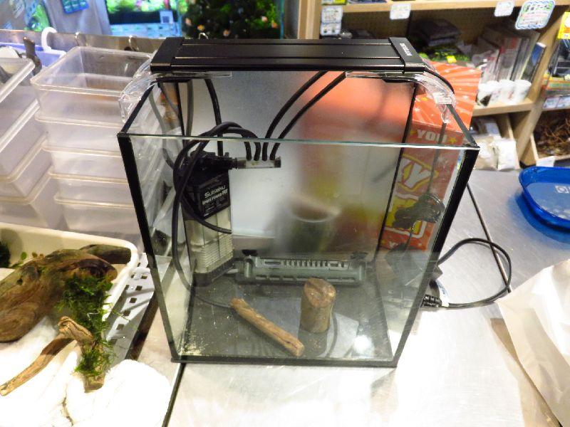 【ソラマチ店】人気のお持ち帰り水槽&珍魚のご紹介。