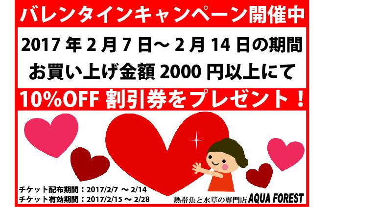 【新宿店】【ソラマチ店】バレンタイン企画スタート!
