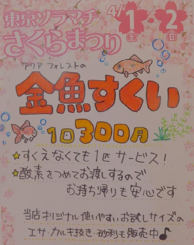 【ソラマチ店】4月1・2日は金魚すくいを開催します∈(゚◎゚)∋
