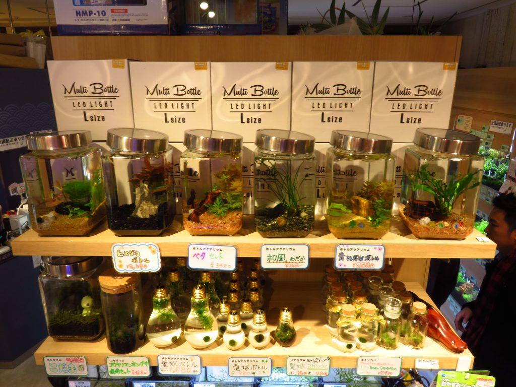【ソラマチ店】ボトルアクアリウムを作ってみよう!