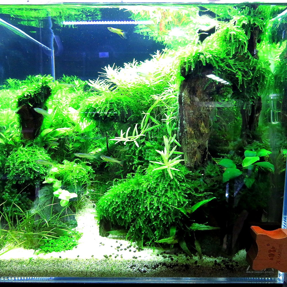 【新宿店】2018年2月17日(土)森の寺子屋「30㎝キューブレイアウト水槽ー美しい水草の森ー」を開催します!!
