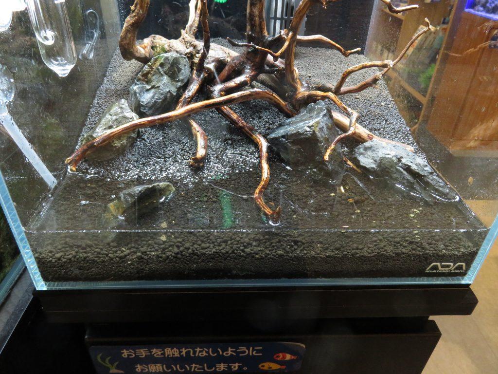 【ソラマチ店】30cmキューブ水槽立ち上げ 続き