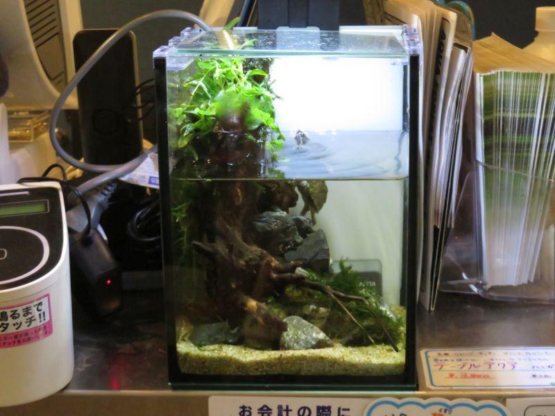 【ソラマチ店】魅惑のカメ水槽~つぶらな瞳にムネキュン