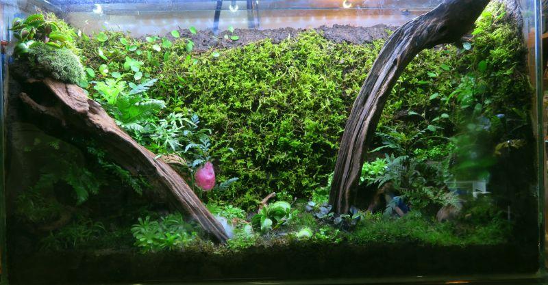 【新宿店】陸上植物も面白い!