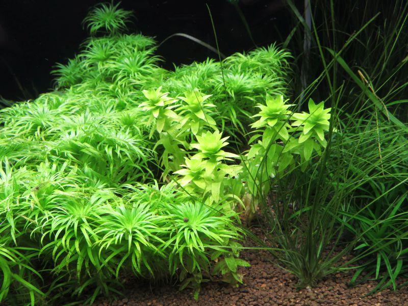 【新宿店】植物を楽しもう!