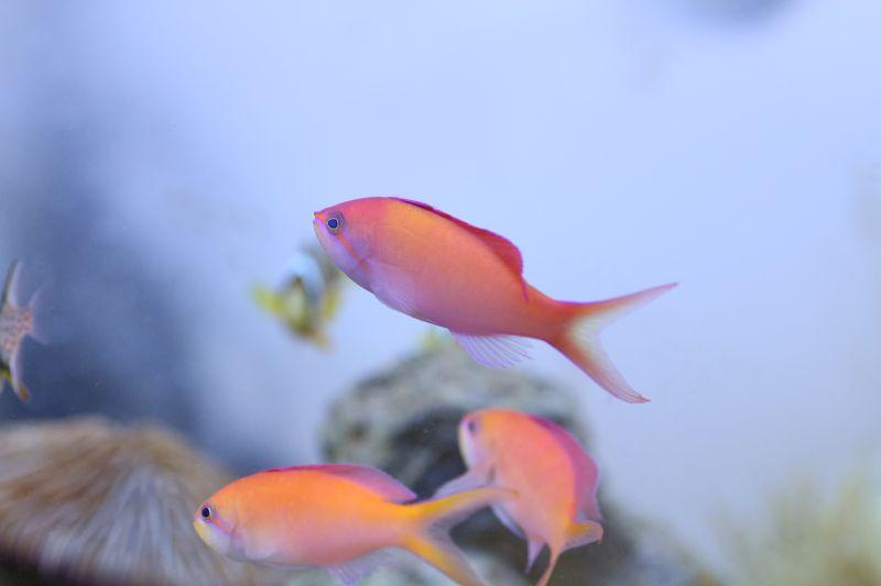 【ソラマチ店】プチ・マリンフォレストお魚のご紹介。