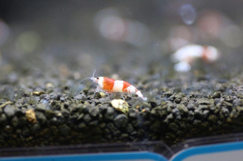 【ソラマチ店】お魚が少量ですが入荷しました。