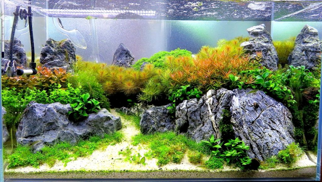 【新宿店】60㎝水槽レイアウト!水草の山!水槽の中の森!