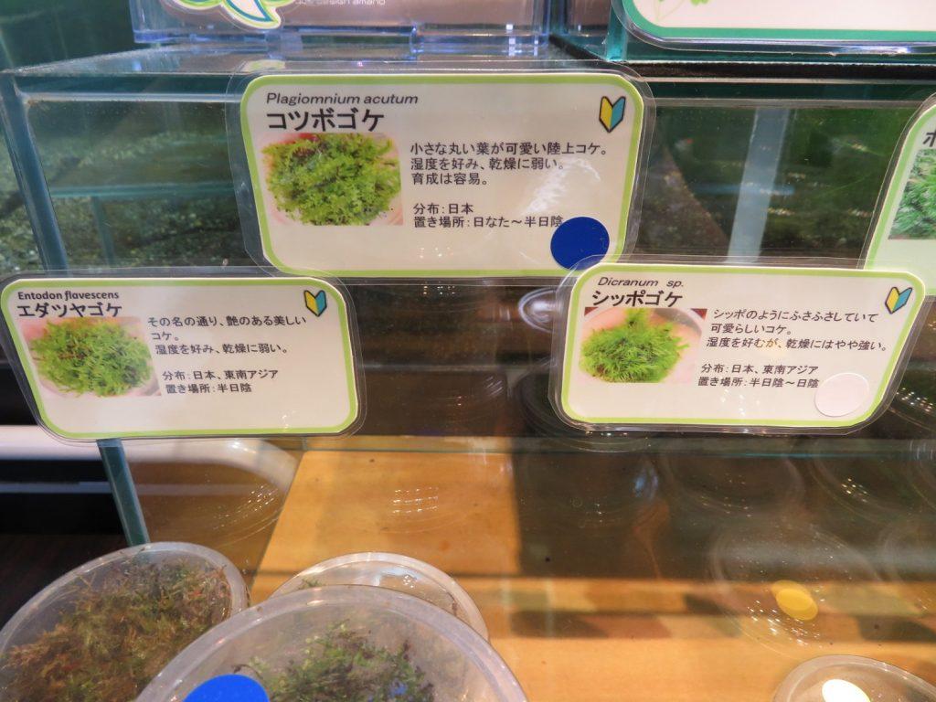 【新宿店】店内のコケ在庫紹介と森の寺子屋のお知らせ!!