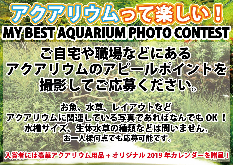 結果発表!「アクアリウムって楽しい!MY BEST AQUARIUM PHOTO CONTEST」