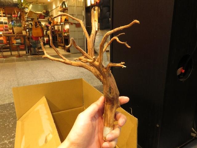 【ソラマチ店】枝状流木入荷しました!