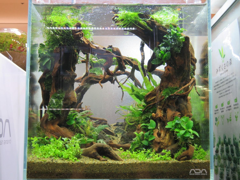 【新宿店】森の寺子屋「30cmキューブ水槽」を制作しました!!
