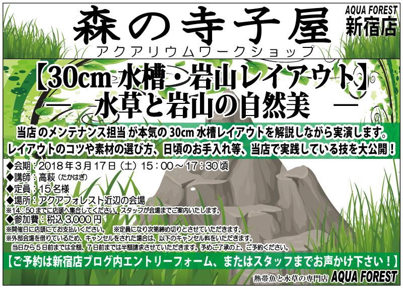 【新宿店】2018年3月17日(土)森の寺子屋30cm水槽「石組みレイアウト実演」開催します!!
