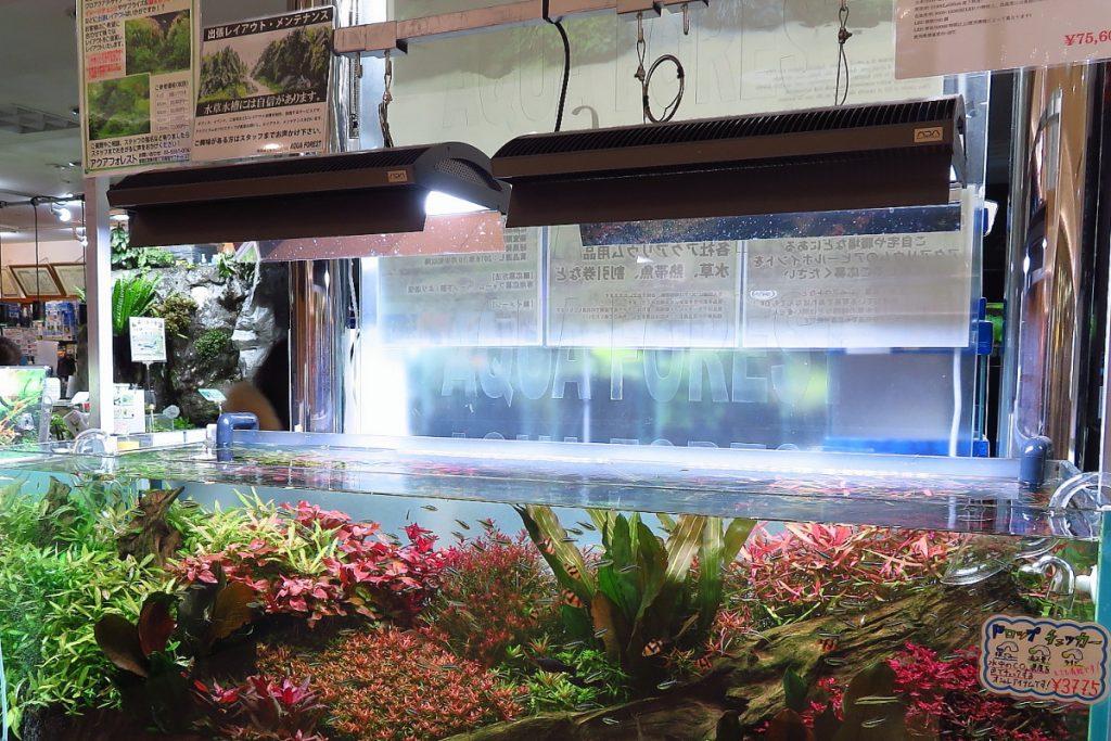 【マメ知識】水草水槽の「光」