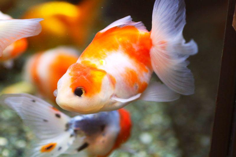 【ソラマチ店】お魚のご紹介。