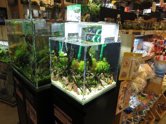 【ソラマチ店】30キューブ水槽リセット!