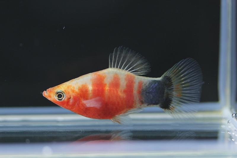 【新宿店】写真付きお魚紹介です♪(後編)