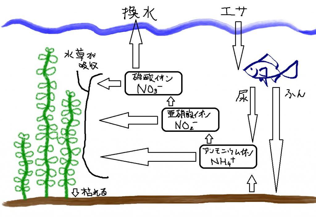 【マメ知識】水草水槽の微生物 その①