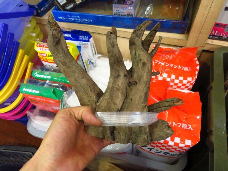 【新宿店】底カット流木入荷しました!