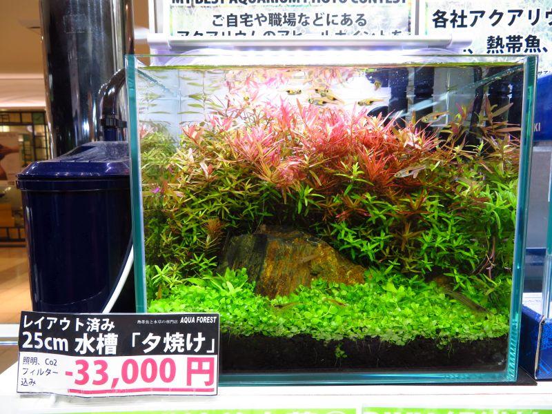 【新宿店】25㎝水槽でもここまでできます!