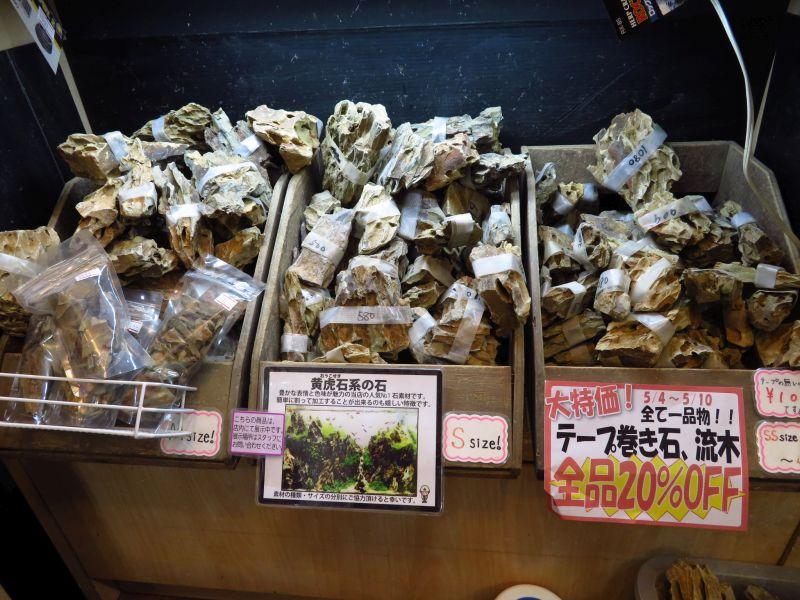 【新宿店】流木入荷しております!