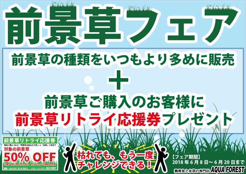 【新宿店】前景草フェア延長します!