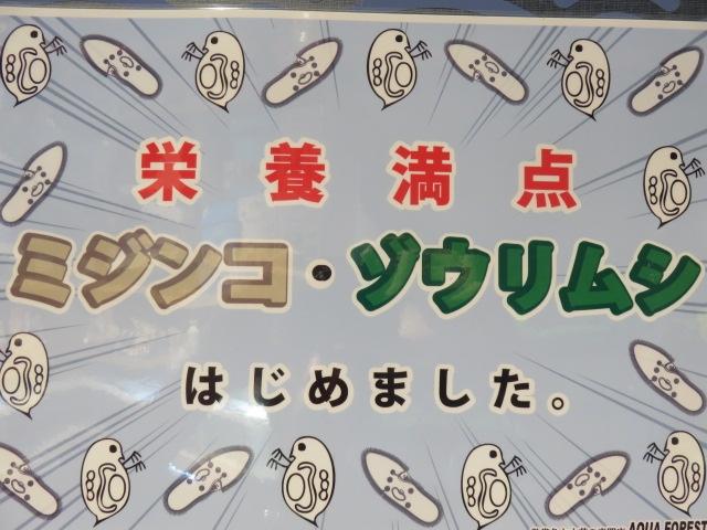 【ソラマチ店】ソラマチでも活ミジンコ・活ゾウリムシが買える!やったぜ!!
