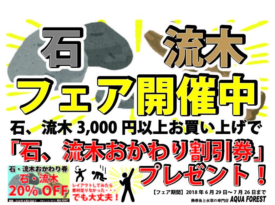 【新宿店】石・流木フェア開催!6月29日~7月26日