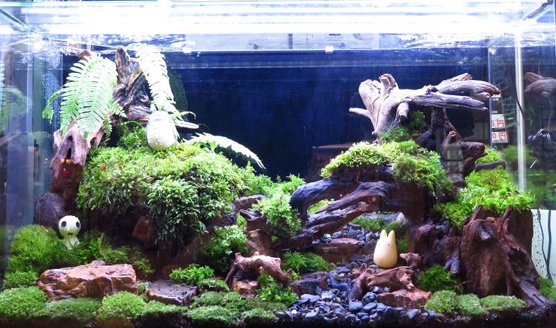 【新宿店】コケのある生活と森の寺子屋告知♪♪