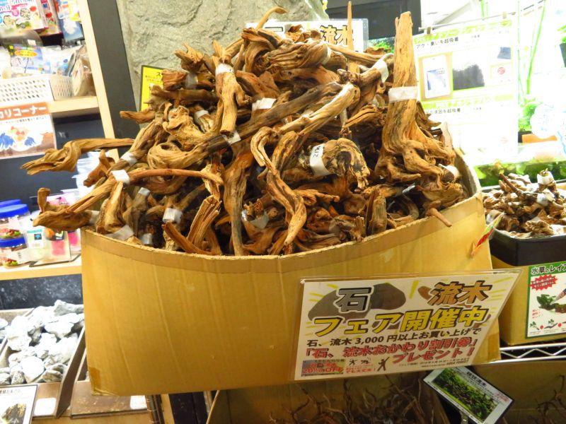 【新宿店】アク抜き流木200本、黄虎石、山谷石、溶岩石入荷しました!